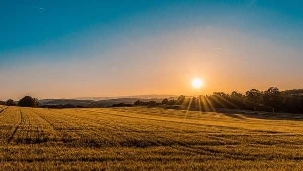 Sonne über Feld